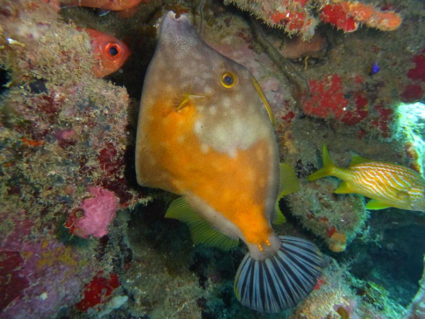 Honduras, Feilenfisch
