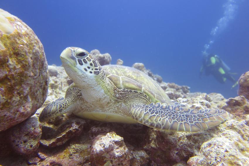 Pro Dive Mauritius , Mauritius