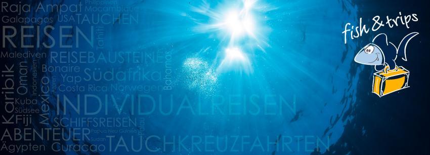 fish & trips gmbh, Reiseveranstalter, Österreich, Gablitz, Individualreisen, Specials, Gruppenreisen, Sonderreisen, Epic Shark Expeditions, Fish & Trips Wien Oesterreich