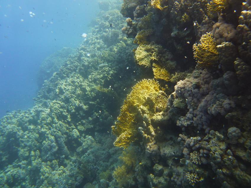 Ras um Sid3, Circle Divers, Badawia Hotel, Ras Um Sid, Sharm El Sheikh, Ägypten, Sinai-Süd bis Nabq
