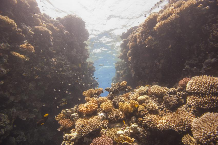Scuba_World_Divers_Soma_Bay_6, Tauchen_in_Soma_Bay, Scuba World Divers Soma Bay, Caribbean World Resort, Ägypten, Safaga