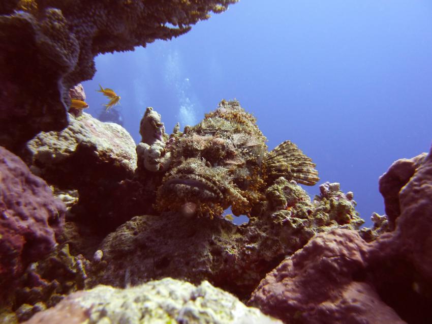 Drachenkopf, Safaga ORCA - Dive Clubs,Ägypten