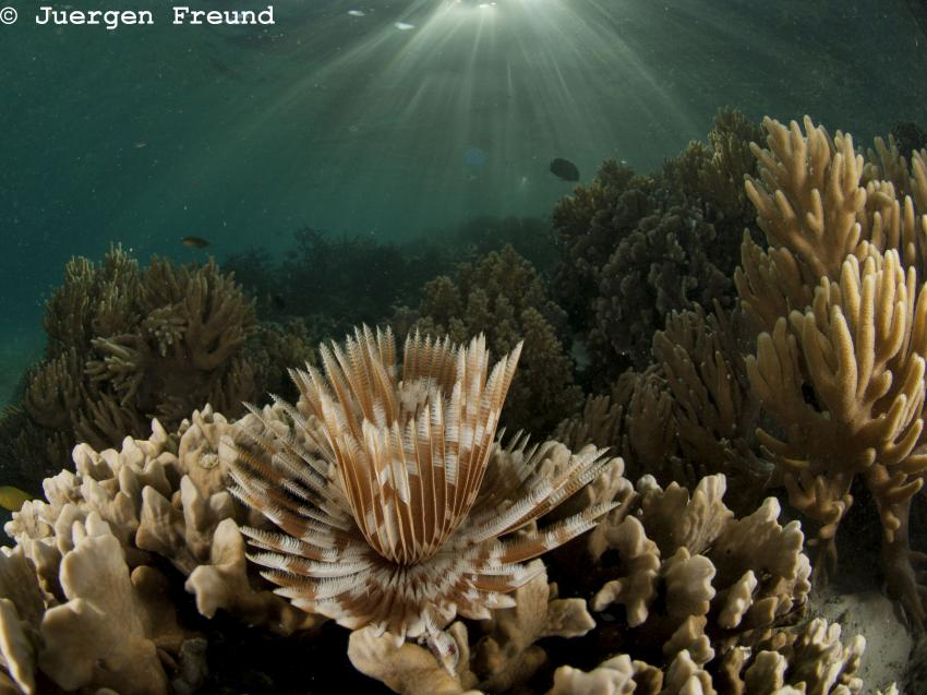 Lissenung Island Resort, Papua-Neuguinea