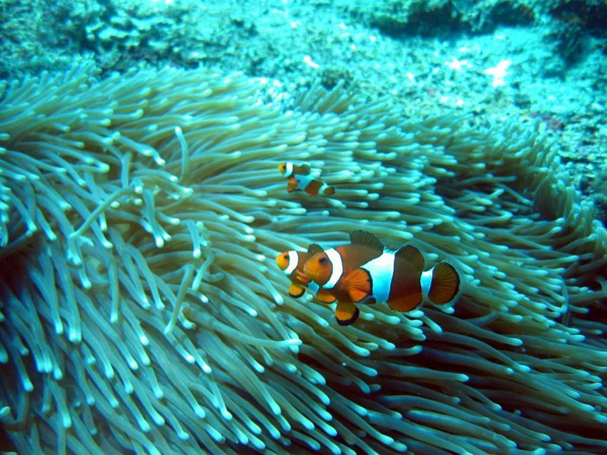 Bali Allgemein, Bali,Indonesien