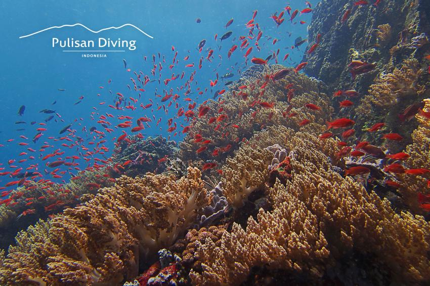 Pulisan Diving, Reef, NS Cap , Indonesia, Happy Dugong Dive Center im Pulisan Beach Resort, Indonesien, Sulawesi