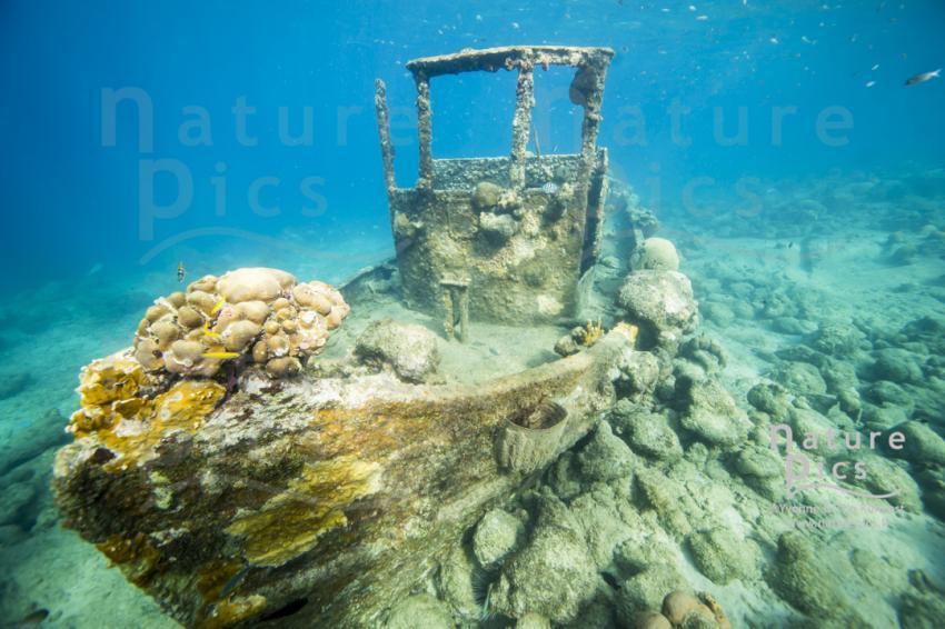 Tugboat - Willemstad, Poppy Hostel Curacao, Willemstad, Niederländische Antillen, Curaçao