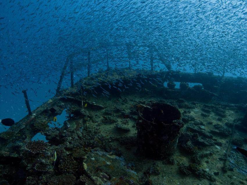 Kudimaa Wrack, Machchafushi,Ari Atoll,Malediven,Wrack,Glasfische,Fischsuppe