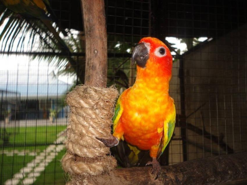 Jendayas, Parrot Resort Moalboal, Philippinen