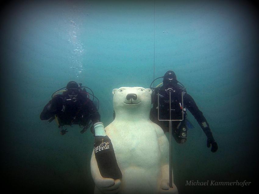 """Eisbär """"Arno"""", Tauchsport Pazifik, Graz, Österreich"""