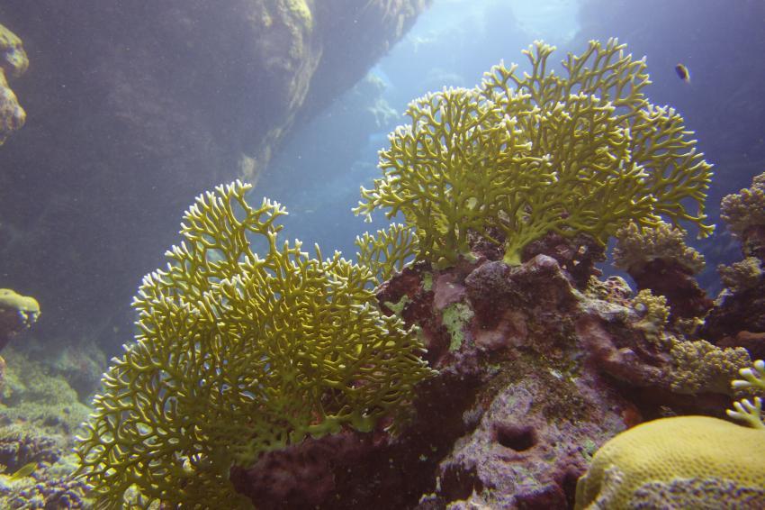 Riff und Wacktauchplatz vor Jeddah, Open sea reef outside Jeddah / Durrah Beach Ressort,Saudi-Arabien