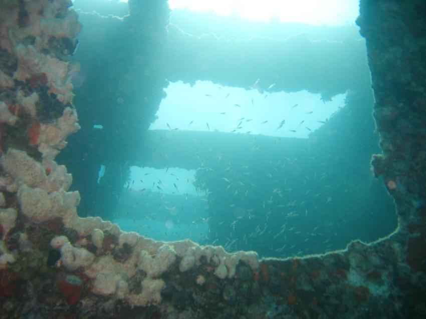 Wrack der MS Balena, Wrack der MS Balena,Ägypten