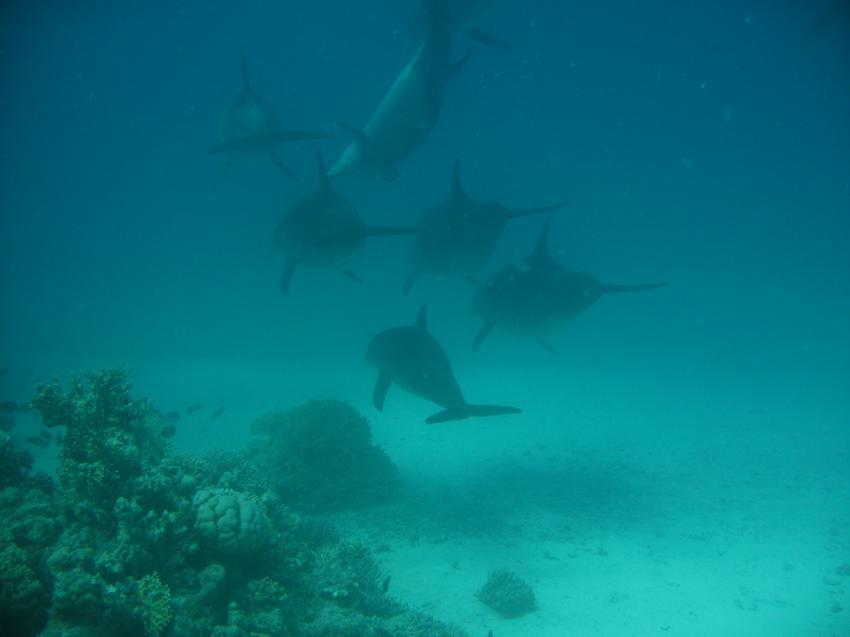 Annette & Jürgen RedSea-Divers, Hurghada