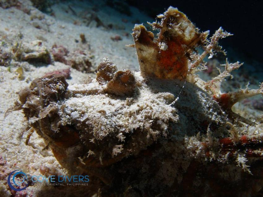 Cove Divers, Philippinen