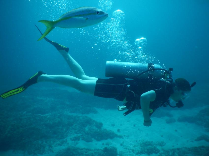 Erster Tauchgang vor Bavaro Beach, Ultra Marine Divers, Punta Cana, Dominikanische Republik