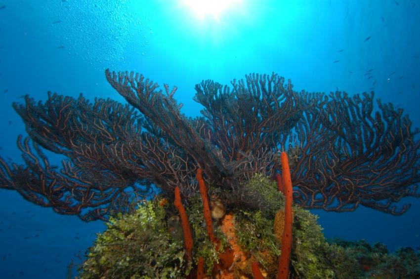 Ocho Rios unterwasser, ScubaCaribe Ocho Rios - ClubHotel RIU, Jamaika
