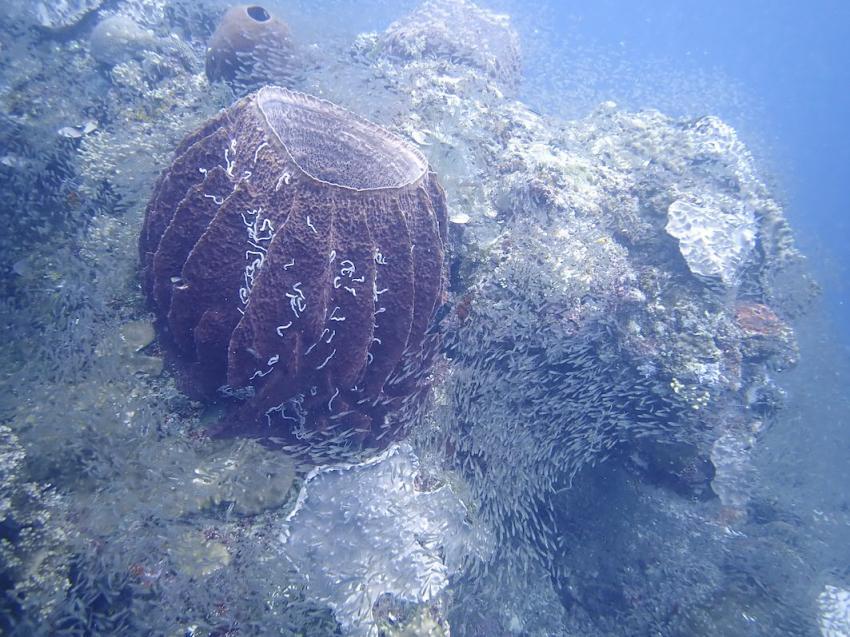 Karang Bagus , Korallen, Kei Pirate Divers, Indonesien, Allgemein