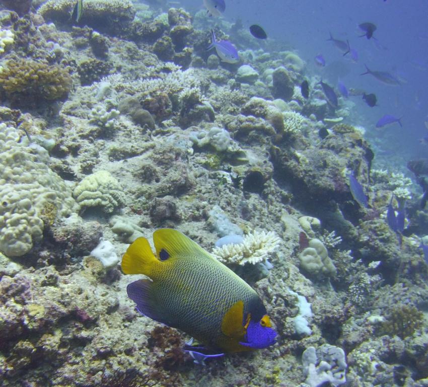 The Barefoot Diving Center, Hanimadhoo, Malediven