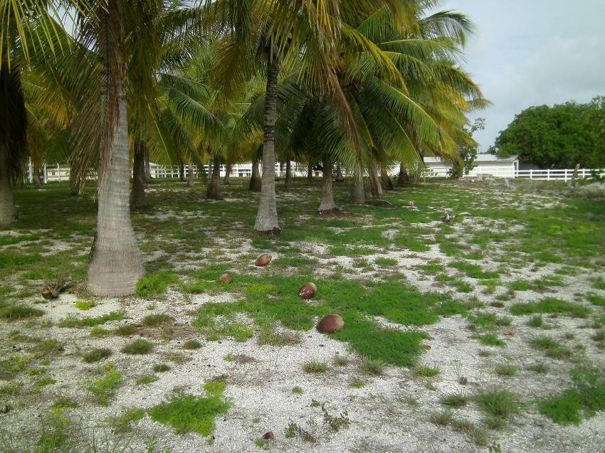 Friedhof auf Bikini Island, Bikini Atoll, Marshallinseln