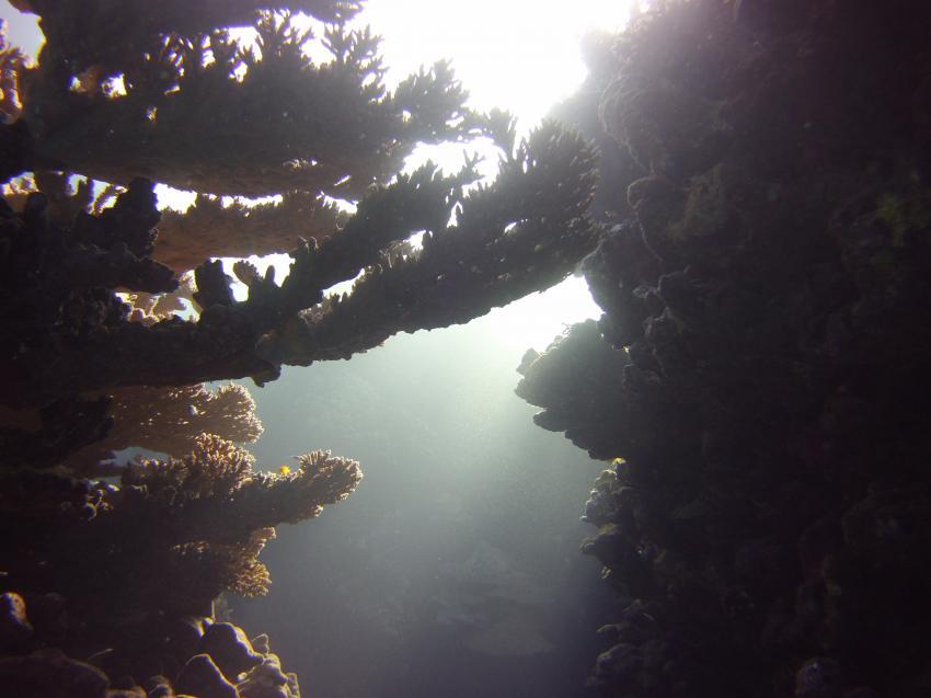 Mythische Korallenwelt, Deep Ocean Blue Diving Center, Marsa Alam, Ägypten, El Quseir bis Port Ghalib