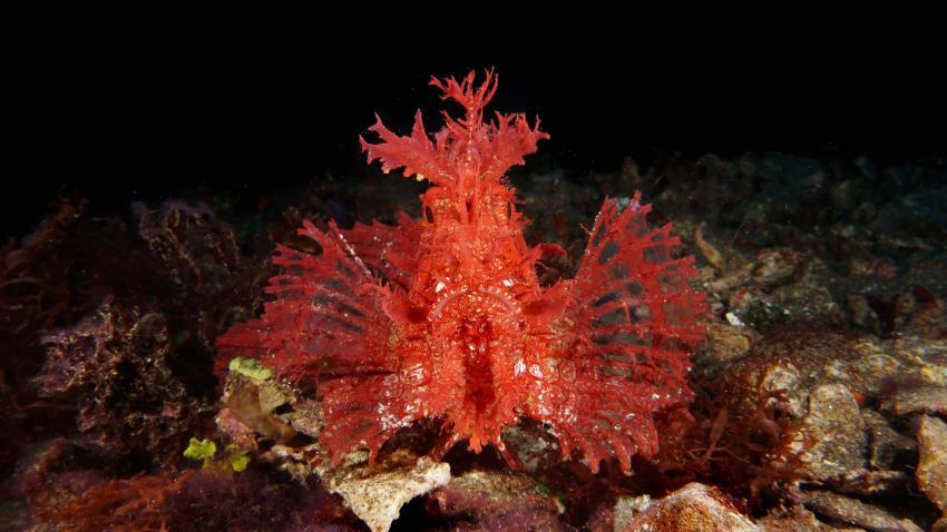 Alami Alor Dive Resort, Indonesien, Allgemein