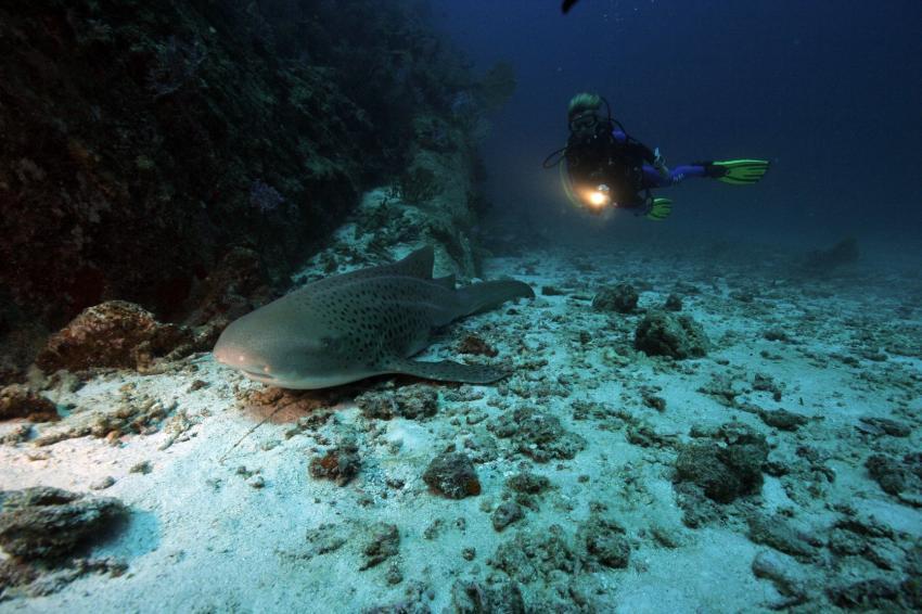 Similan Islands, Similan Islands,Thailand,Leopardenhai,Taucher