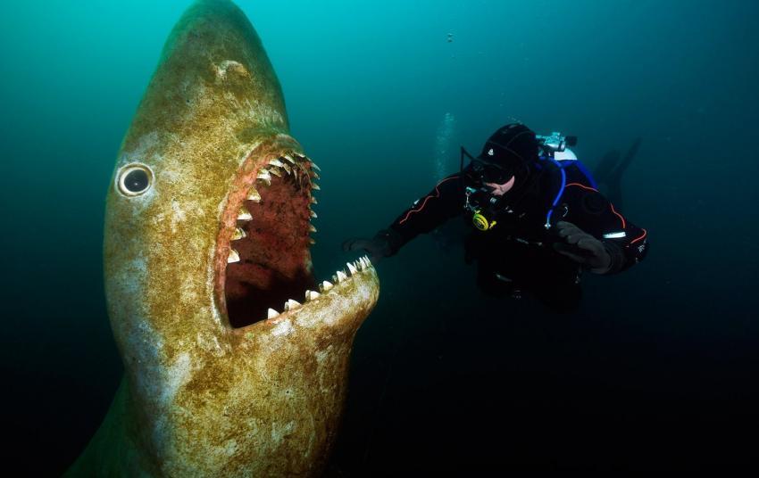 Hai in einem Deutsche See