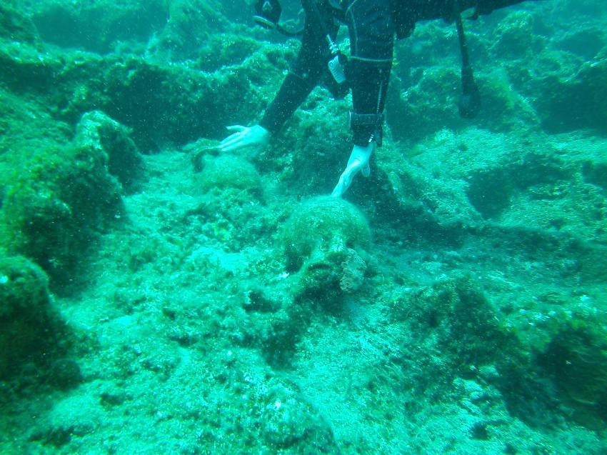 Zwei noch ganze Ampfhoren, Kefalonia, Roman Wreck, Griechenland