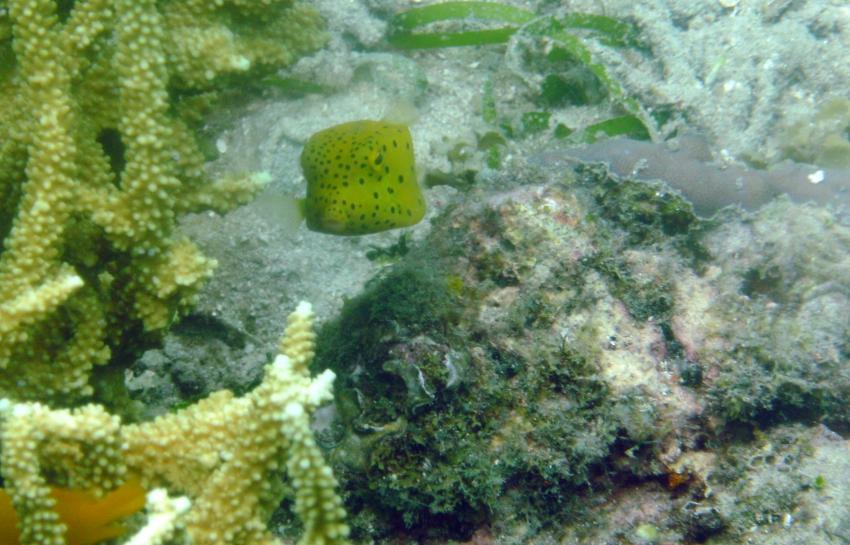 Dive Hub Antulang, Dive Hub Antulang,Philippinen