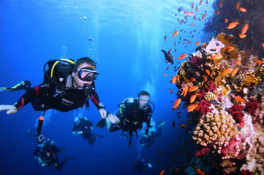 red sea, tauchen_lernen, padi, dive-pirates, Dive Pirates, Österreich