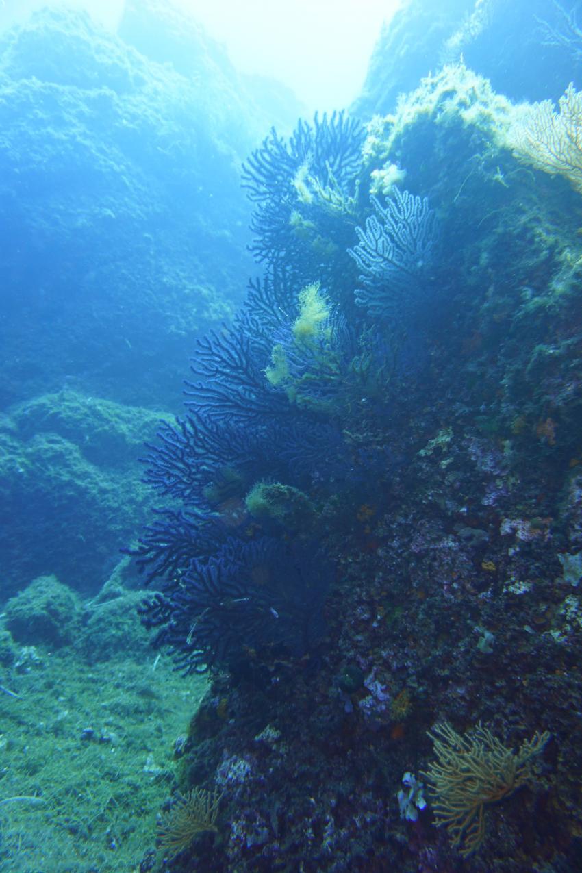 Mio Palmo Plongees, Hyeres, Frankreich