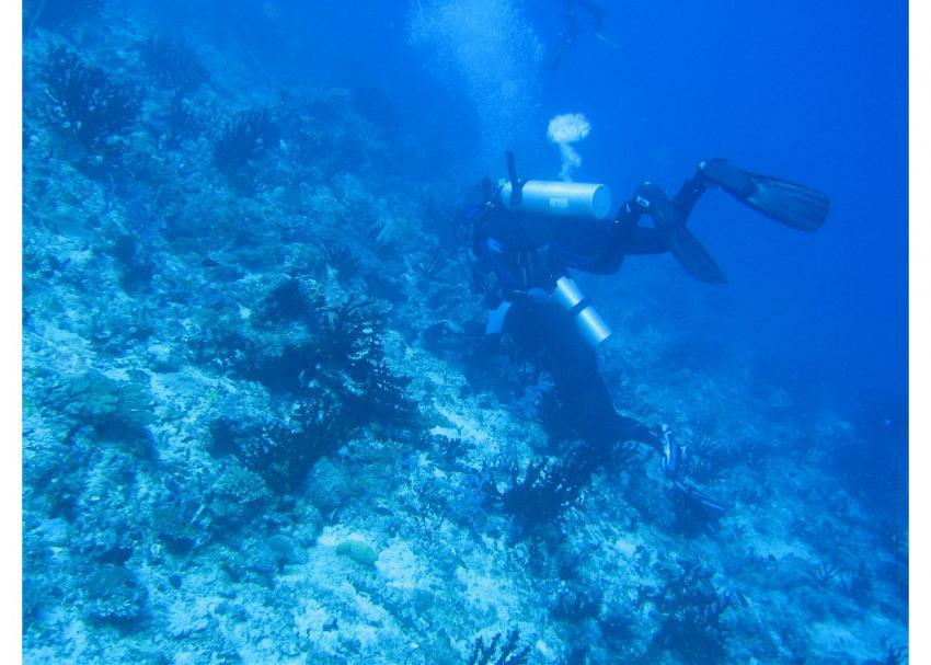 Sicherer Stand, Ari Atoll,Malediven