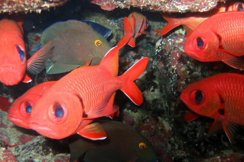 Maui Fish, Maui Süd,Hawaii,USA