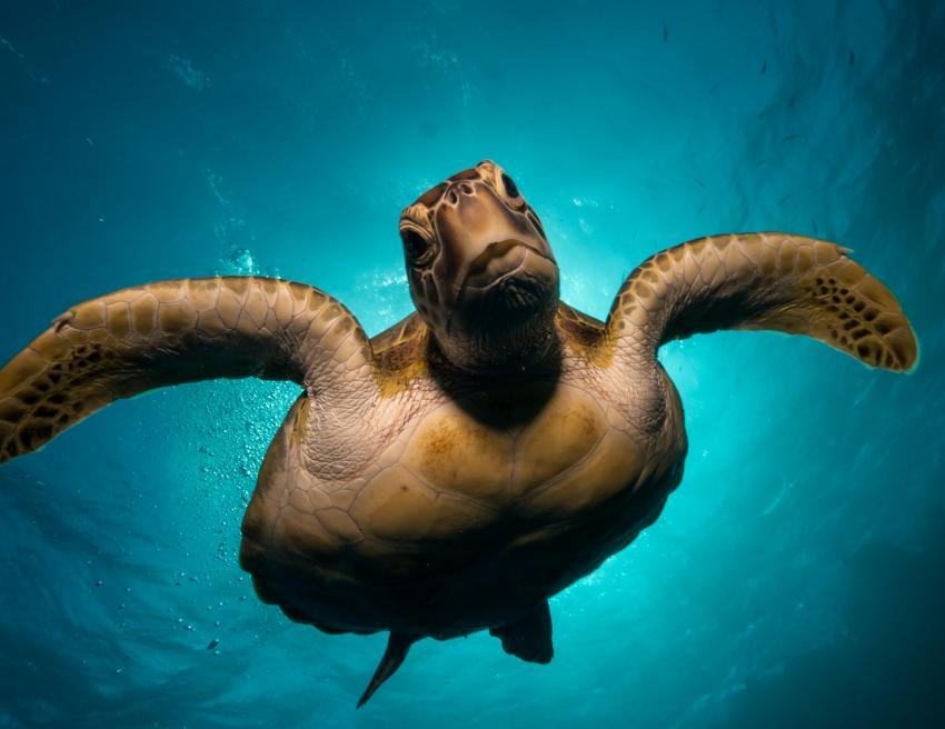 Turtle Housereef
