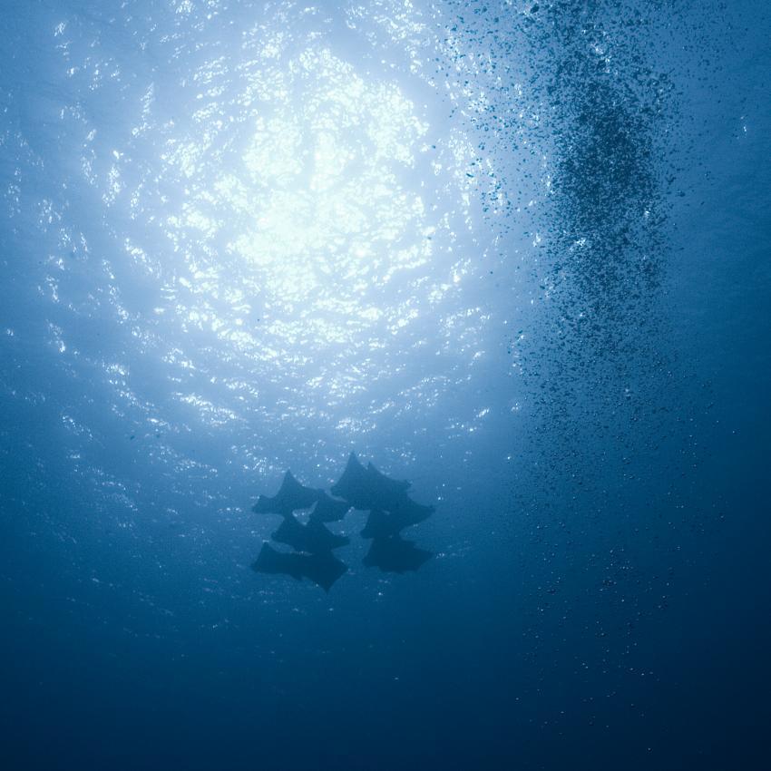 Komodo mit der SY Indo Siren