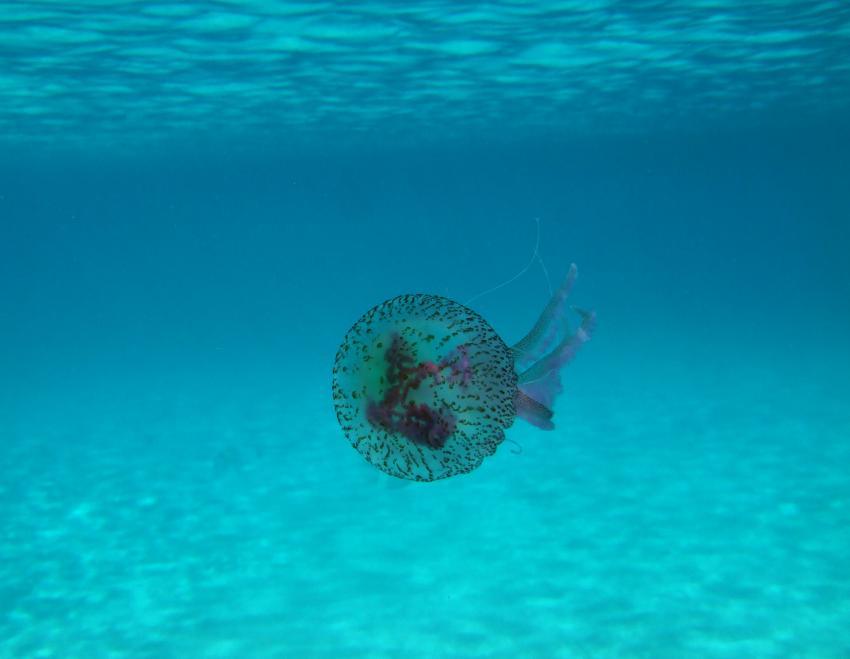 Menorca, Son Bou