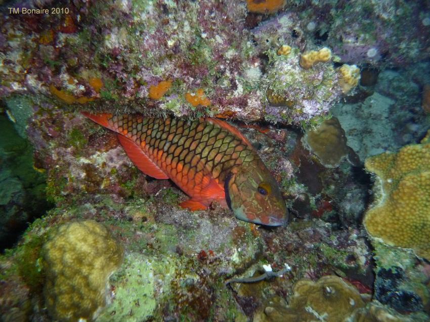 Allgemein, Something Special,Bonaire,Niederländische Antillen