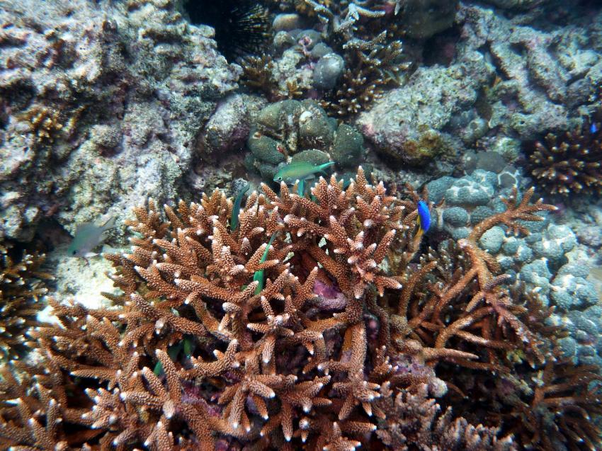 Marine Park, Mahe,Baje Ternay Marine Park,Seychellen