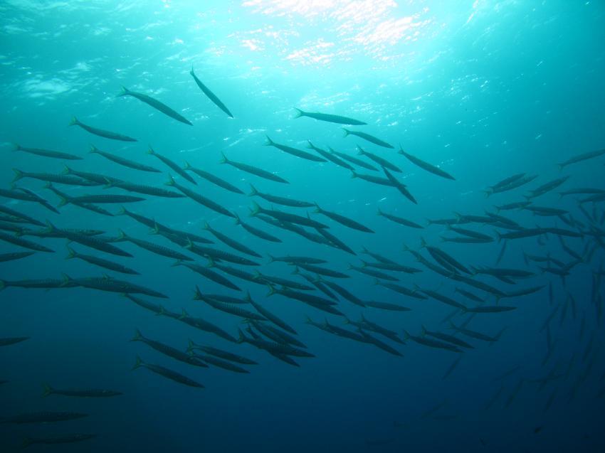 Xlendi Bay, Xlendi Bay,Gozo,Malta,Schwarm,Fischschwarm