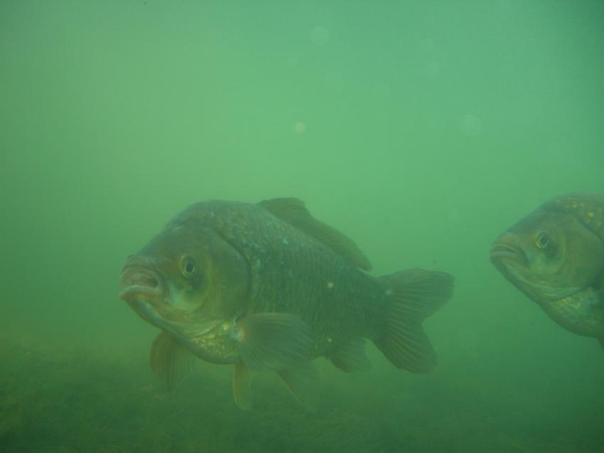 Badischer Baggersee