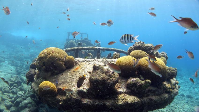 Curacao 2014, Curacao,Curaçao,Niederländische Antillen,Tugboat