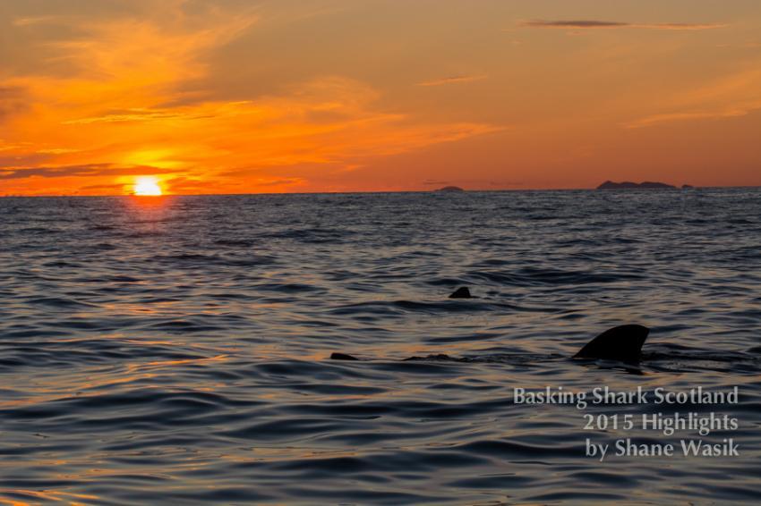 Sonnenuntergang in den Hebriden, Sunset, Sonnenuntergang, Riesenhai, Basking Shark Scotland, Oban, Großbritannien, Schottland