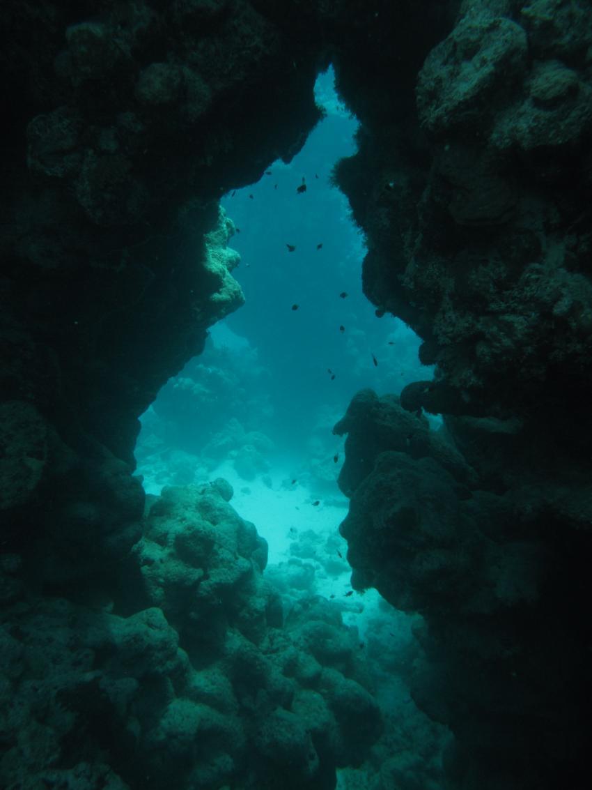 Orca Dive Club Tulip