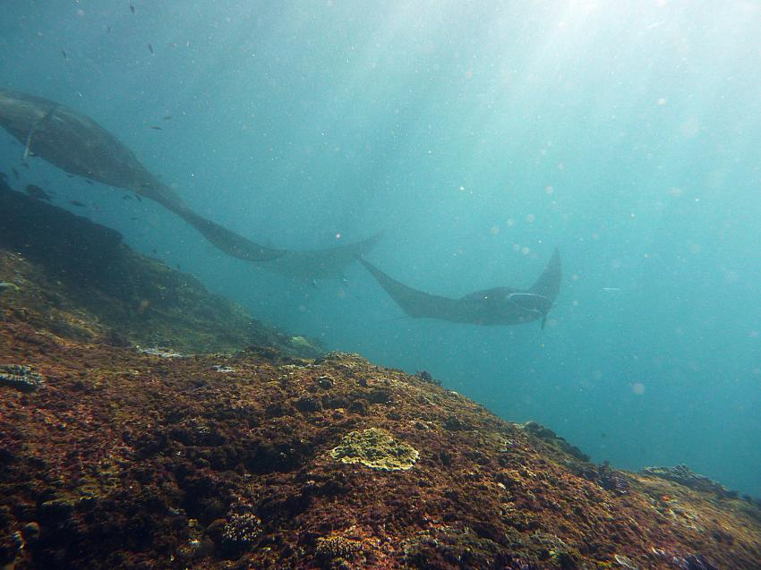 Tulamben und Umgebung, Bali Dive Quest Tulamben,Indonesien