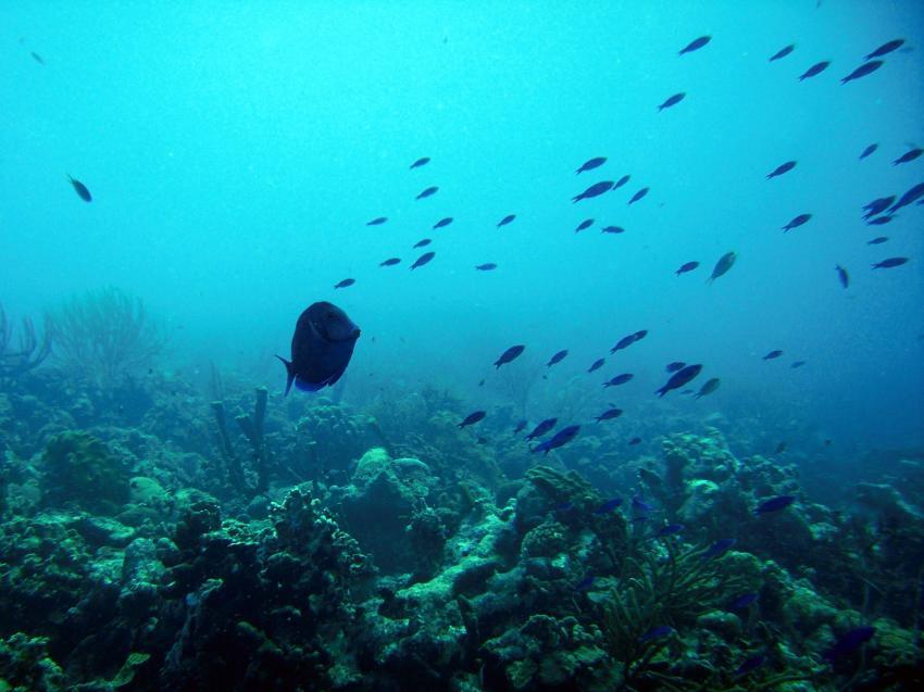 Karpata, Karpata,Bonaire,Niederländische Antillen