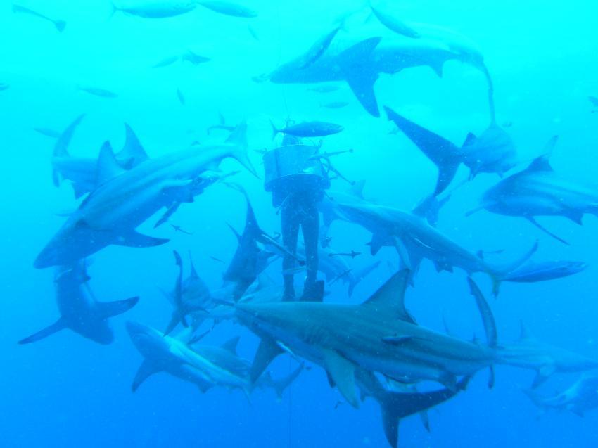 Haie ohne Ende
