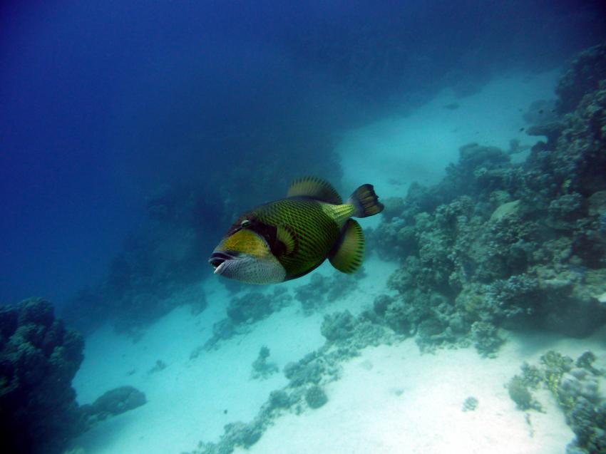 Extra Divers, Brayka Bay, Marsa Alam