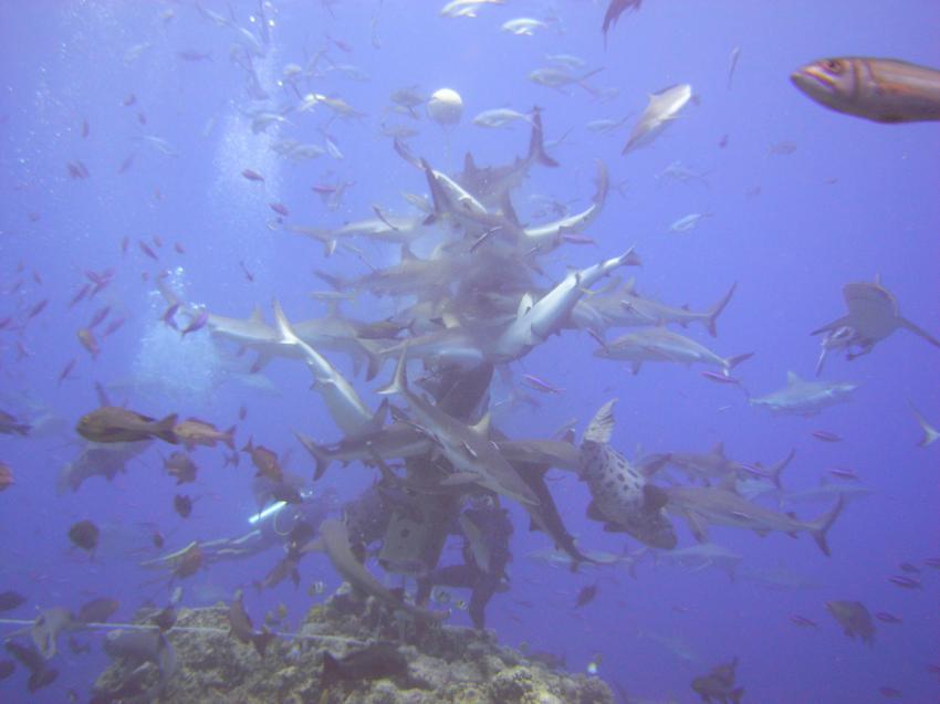 Osprey Reef North Horn