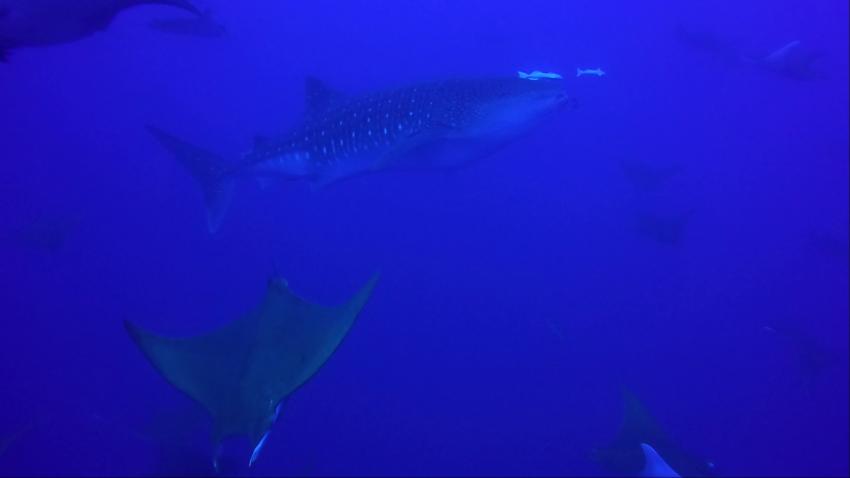 Wahoo Diving, Santa Maria, Azoren, Portugal, Azoren
