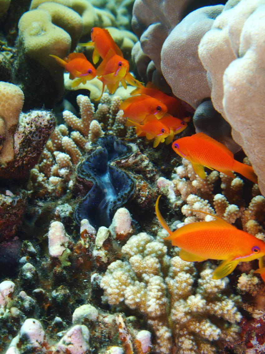 Zerib Kebir @ Wonderful-Dive, Zerib Kebir,Ägypten