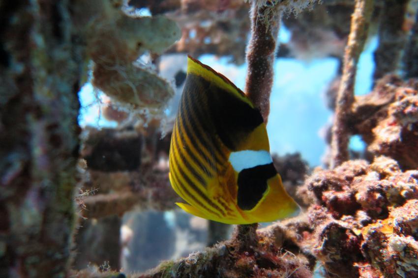 SWD1, Scuba World Divers Makadi Bay, Ägypten, Hurghada